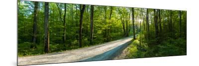 Dirt Road Passing Through a Forest, Great Smoky Mountains National Park, Blount County, Tennesse...--Mounted Photographic Print