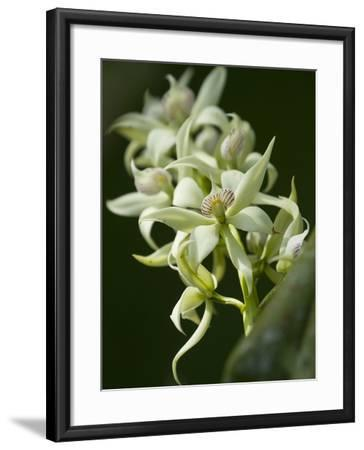 Orchid Flowers at a Botanical Garden in Costa Rica-Michael Melford-Framed Photographic Print