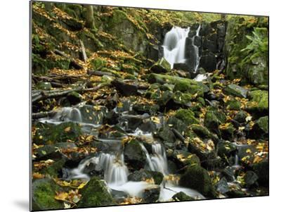 Small Waterfalls Cascading over Moss-Covered Rocks-Norbert Rosing-Mounted Photographic Print