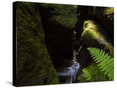 A Canyoneer Wades Through a Moss Covered Passage-Peter Carsten-Stretched Canvas Print