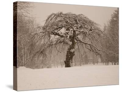 Trees and Landscape Covered in a Blanket of Snow-Heather Perry-Stretched Canvas Print