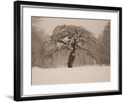 Trees and Landscape Covered in a Blanket of Snow-Heather Perry-Framed Photographic Print