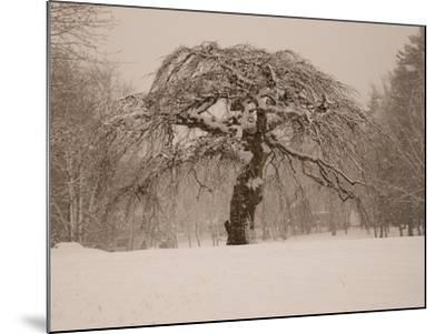Trees and Landscape Covered in a Blanket of Snow-Heather Perry-Mounted Photographic Print