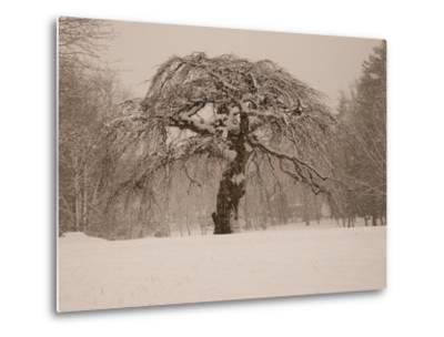 Trees and Landscape Covered in a Blanket of Snow-Heather Perry-Metal Print
