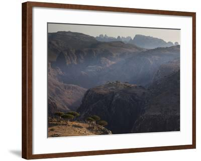 Dragon's Blood Trees Grow in Scattered Groves-Michael Melford-Framed Photographic Print