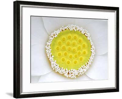 The Complex and Elegant Inner Workings of a White Lotus-Stephanie Lane-Framed Photographic Print