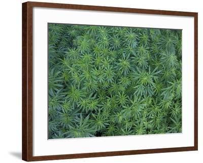 Plant Growth Near the Niobrara River-Michael Melford-Framed Photographic Print
