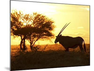 Silhouetted Gemsbok, Oryx Gazella, and Tree at Sunrise-Roy Toft-Mounted Photographic Print
