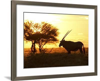 Silhouetted Gemsbok, Oryx Gazella, and Tree at Sunrise-Roy Toft-Framed Photographic Print