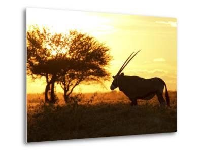 Silhouetted Gemsbok, Oryx Gazella, and Tree at Sunrise-Roy Toft-Metal Print