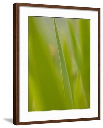 An Iris Leaf in the Tuscan Countryside-Kenneth Ginn-Framed Photographic Print
