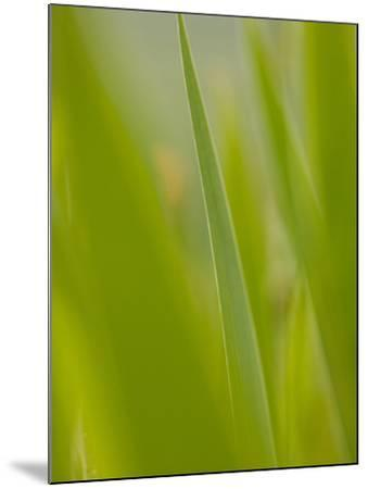 An Iris Leaf in the Tuscan Countryside-Kenneth Ginn-Mounted Photographic Print
