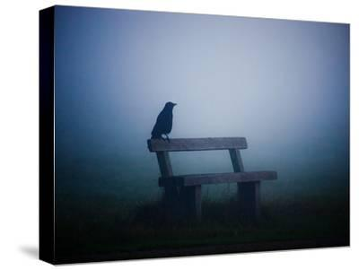 A Large Western Jackdaw Sits on a Bench in Dense Fog-Alex Saberi-Stretched Canvas Print