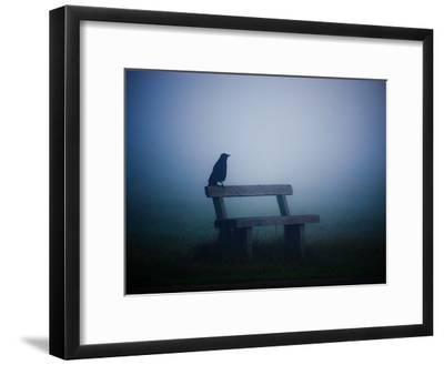 A Large Western Jackdaw Sits on a Bench in Dense Fog-Alex Saberi-Framed Photographic Print