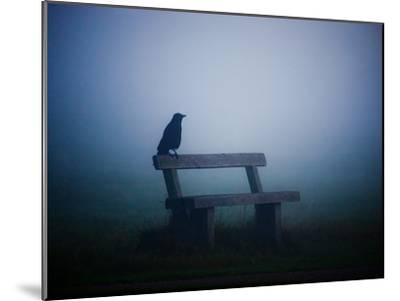 A Large Western Jackdaw Sits on a Bench in Dense Fog-Alex Saberi-Mounted Photographic Print
