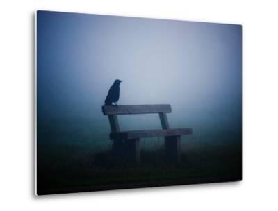 A Large Western Jackdaw Sits on a Bench in Dense Fog-Alex Saberi-Metal Print