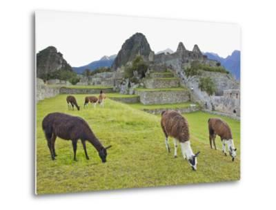 Llamas Eating on the Grounds of the Inca Ruins of Machu Picchu-Mike Theiss-Metal Print