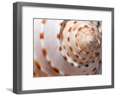 Close Up of a Whelk Shell-Darlyne A^ Murawski-Framed Photographic Print