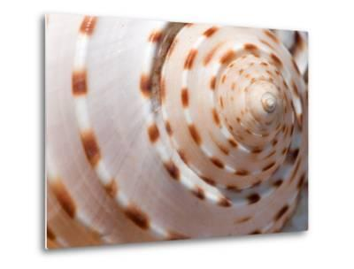 Close Up of a Whelk Shell-Darlyne A^ Murawski-Metal Print