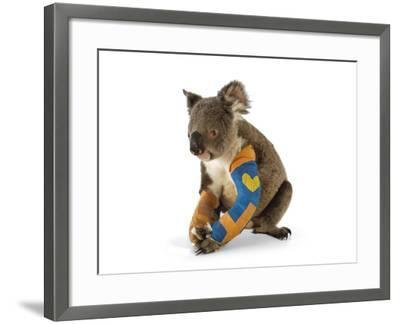 A Koala Recuperates in a Hospital after Being Struck by a Car-Joel Sartore-Framed Photographic Print