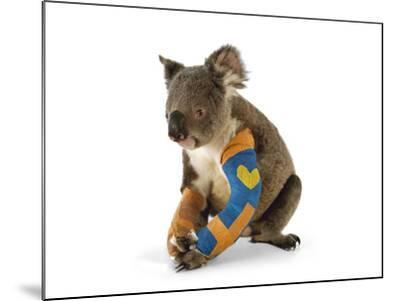 A Koala Recuperates in a Hospital after Being Struck by a Car-Joel Sartore-Mounted Photographic Print