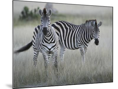 Portrait of a Pair of Zebras, Equus Species, in a Grassland-Bob Smith-Mounted Photographic Print