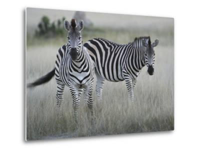 Portrait of a Pair of Zebras, Equus Species, in a Grassland-Bob Smith-Metal Print