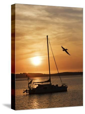 A Silhouetted Sailboat at Sunset and Flying Brown Pelican-Marc Moritsch-Stretched Canvas Print