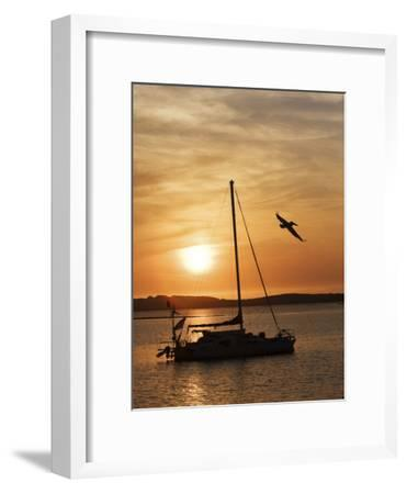 A Silhouetted Sailboat at Sunset and Flying Brown Pelican-Marc Moritsch-Framed Photographic Print