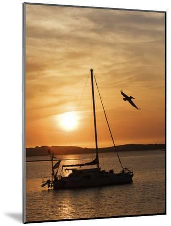 A Silhouetted Sailboat at Sunset and Flying Brown Pelican-Marc Moritsch-Mounted Photographic Print