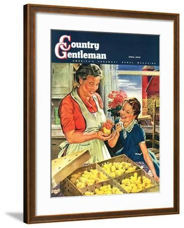 """Crate of New Baby Chicks,"" Country Gentleman Cover, April 1, 1945-W^C^ Griffith-Framed Giclee Print"