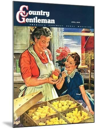 """Crate of New Baby Chicks,"" Country Gentleman Cover, April 1, 1945-W^C^ Griffith-Mounted Giclee Print"