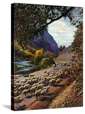 """""""Herding Sheep,""""September 1, 1943-Mike Roberts-Stretched Canvas Print"""