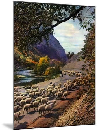 """Herding Sheep,""September 1, 1943-Mike Roberts-Mounted Giclee Print"