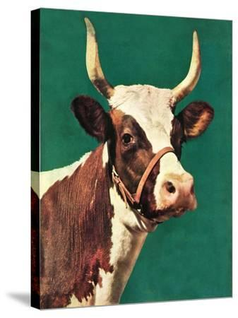 """Long-Horned Cow,""February 1, 1945-F^P^ Sherry-Stretched Canvas Print"