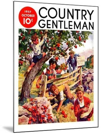 """Stealing Apples,"" Country Gentleman Cover, October 1, 1937-William Meade Prince-Mounted Giclee Print"