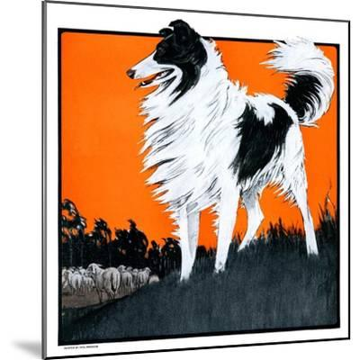 """Sheepdog Oversees Flock,""June 14, 1924-Paul Bransom-Mounted Giclee Print"