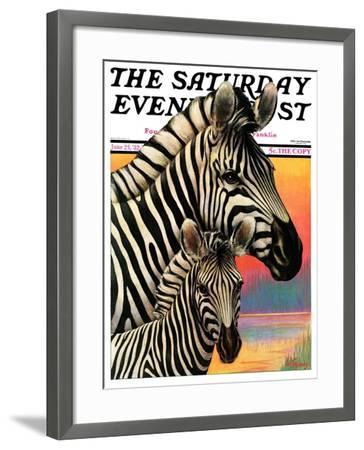 """Zebras,"" Saturday Evening Post Cover, June 25, 1932-Jack Murray-Framed Giclee Print"