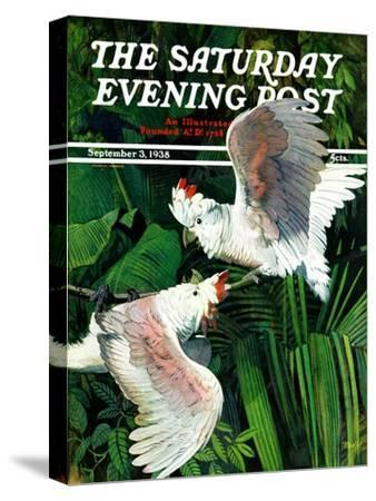 """""""Two Cockatoos,"""" Saturday Evening Post Cover, September 3, 1938-Julius Moessel-Stretched Canvas Print"""