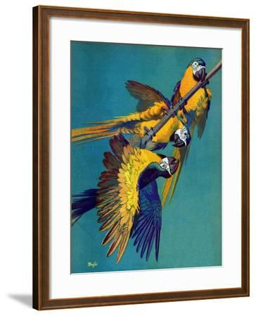"""""""Three Parrots,""""March 11, 1939-Julius Moessel-Framed Giclee Print"""