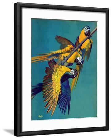 """Three Parrots,""March 11, 1939-Julius Moessel-Framed Giclee Print"