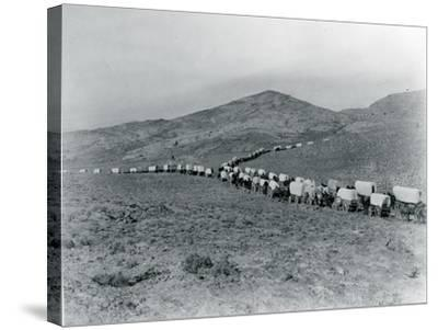 Wagon Train - Oregon Trail Wagon Train Reenactment, 1935-Ashael Curtis-Stretched Canvas Print