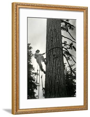 Logger Climbing Tree, ca. 1947-K.S. Brown-Framed Giclee Print