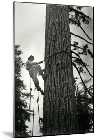 Logger Climbing Tree, ca. 1947-K.S. Brown-Mounted Giclee Print