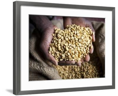 Dried Coffee Beans, Marley Coffee Plantation, Blue Mountains, Portland Parish, Jamaica, Caribbean-Doug Pearson-Framed Photographic Print