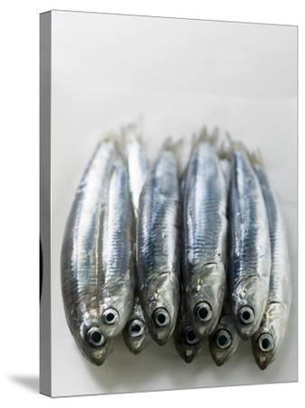 Several Fresh Anchovies--Stretched Canvas Print