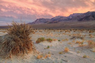 Sunset at Devil's Cornfield-Vincent James-Premium Photographic Print