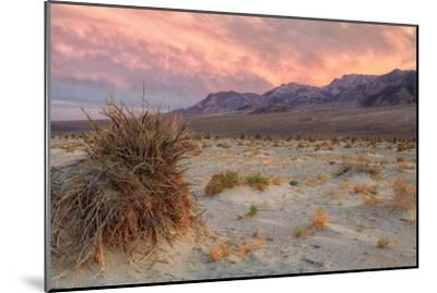 Sunset at Devil's Cornfield-Vincent James-Mounted Photographic Print