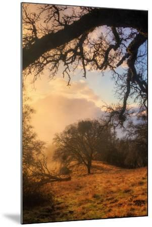 Light and the Back Woods-Vincent James-Mounted Photographic Print