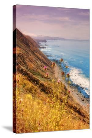 Sonoma Coast Mist-Vincent James-Stretched Canvas Print
